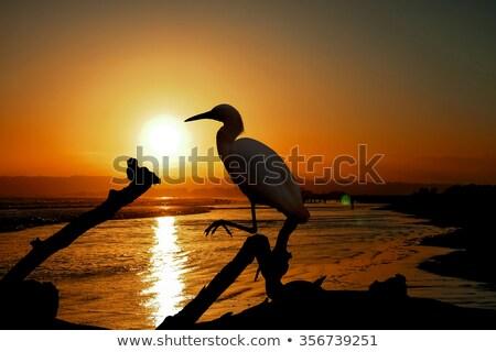 Califórnia · água · praia · agosto · mar · fundo - foto stock © user_9323633