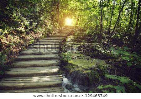 Csendes út ősz park Virginia fa Stock fotó © wildnerdpix