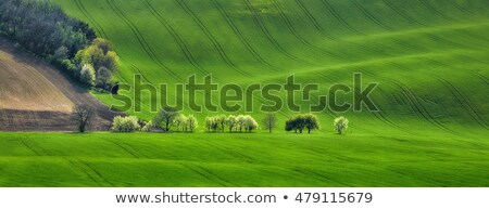 amazing waves of hills and blossom trees   green landscape stock photo © taiga