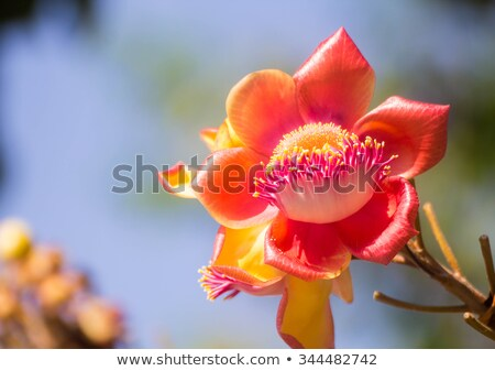 Canhão bola árvore natureza planta Foto stock © art9858