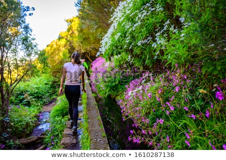waterfall on madeira island 25 fontes stock photo © compuinfoto