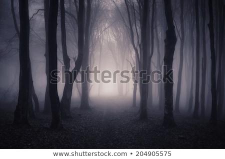 темно лес дороги трава пейзаж области Сток-фото © ankarb