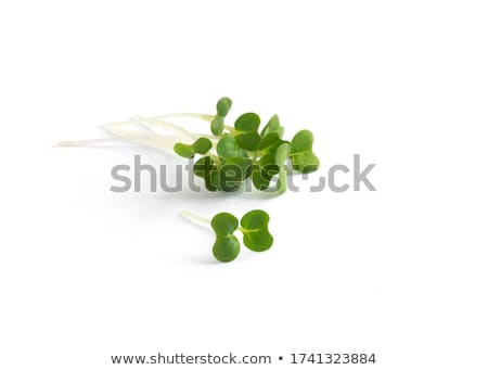 cress sprouts Stock photo © FOKA