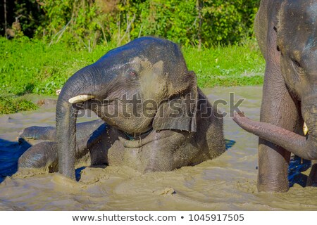 elephant taking a mud bath stock photo © simoneeman