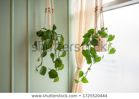 Akasztás levél háttér zöld levelek növény Stock fotó © bluering