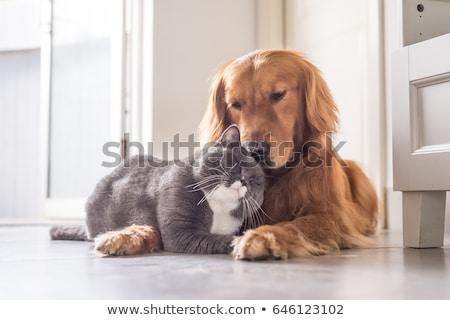 cute dog and cat hugging Stock photo © jawa123