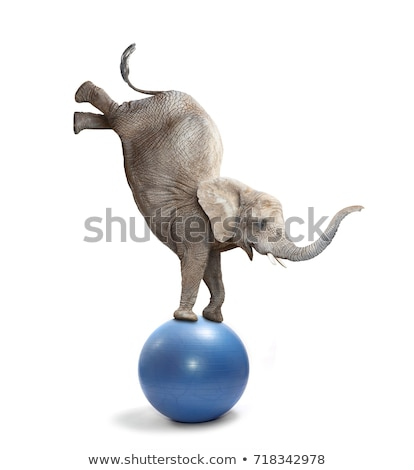 Elephant on ball isolated. Circus animals on white background. Stock photo © popaukropa