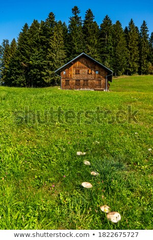 autumn landscape with a beautiful forest and a wooden hut in the stock photo © kotenko