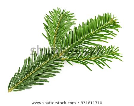 örökzöld · faág · háttér · zöld · absztrakt · természetes - stock fotó © dariazu