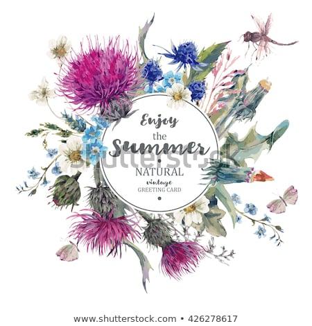 pitypang · virágok · keret · illusztráció · vektor · tavasz - stock fotó © yo-yo-