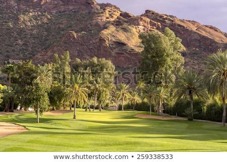 campo · da · golf · golf · buco · alberi - foto d'archivio © alexeys