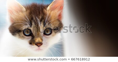Perdu cute chaton regarder accueil Photo stock © Konstanttin