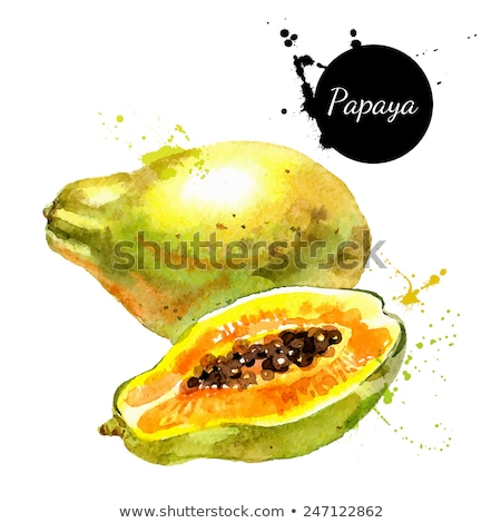 watercolor illustration of papaya stock photo © sonya_illustrations