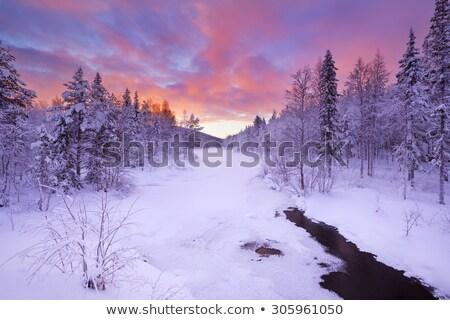 冬 夜明け フィンランド 素晴らしい 冷たい 自然 ストックフォト © Estea