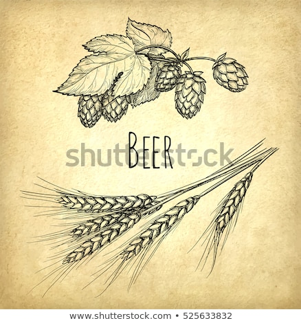 Beer set. Vintage sketch and old paper texture. Vector illustration. Stock photo © FoxysGraphic