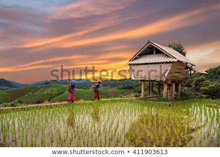 Vietnam dorp rijst velden bergen natuur Stockfoto © romitasromala