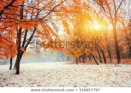 First winter snow and last autumn leafs in forest Stock photo © wildman