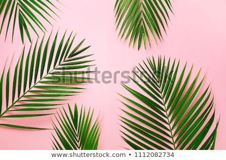 Trópusi zöld levél minta természetes pálmalevelek rózsaszín Stock fotó © artjazz