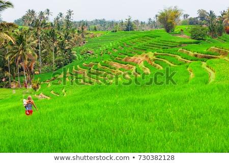Fiú rizsföld rizs Bali Indonézia utazó Stock fotó © galitskaya