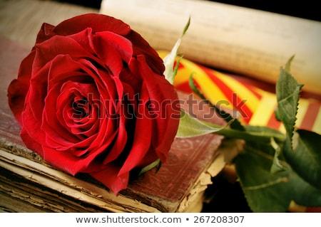 Libro Rose Red bandera primer plano nombre Foto stock © nito