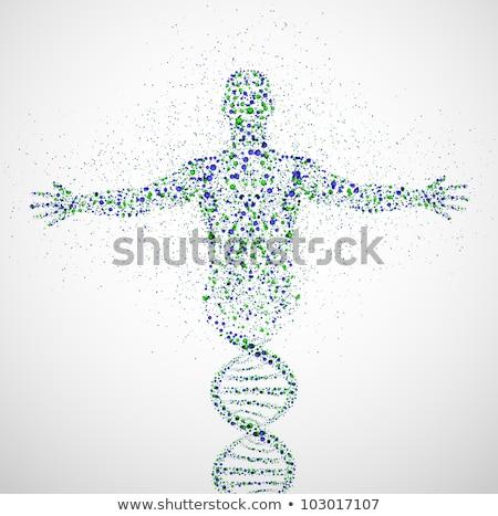 vektör · DNA · ikon · renkli · düğmeler · dizayn - stok fotoğraf © marish