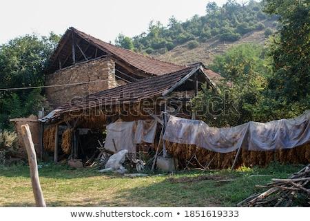 Geleneksel tütün çadır yol kırsal doğa Stok fotoğraf © simazoran