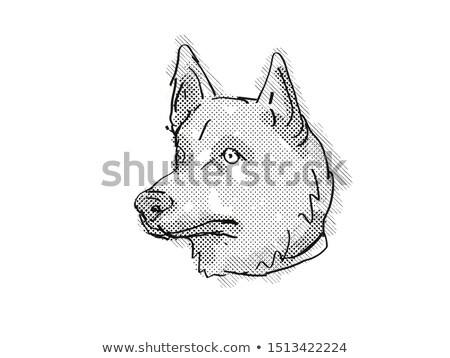 Corgi Inu Mixed Breed Dog Breed Cartoon Retro Drawing Stock photo © patrimonio