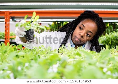 Fiatal női néz zöld palánták polc Stock fotó © pressmaster