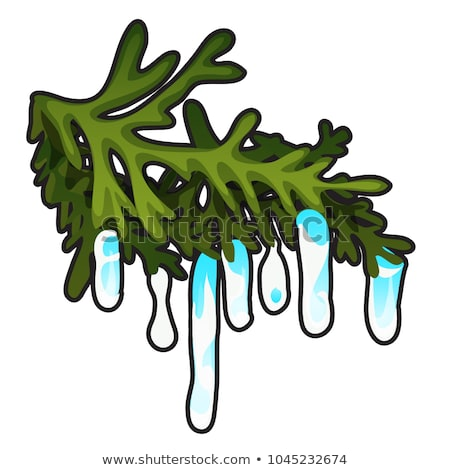 Frozen icicles on the branch of a coniferous tree isolated on white background. Vector cartoon close Stock photo © Lady-Luck