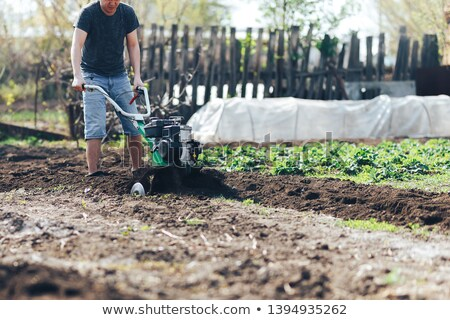 Gardener cultivate ground soil with tiller tractor or rototiller, cutivator Stock photo © Illia