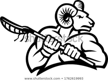Bighorn Ram Mountain Goat or Sheep Holding a Lacrosse Stick Black and White  Stock photo © patrimonio