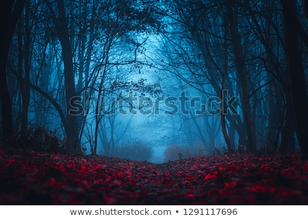 Foto stock: Silhouettes Of Trees In A Foggy Mysterious Forest