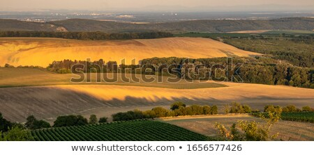 Foggy Sunset over California Meadow stock photo © mtilghma