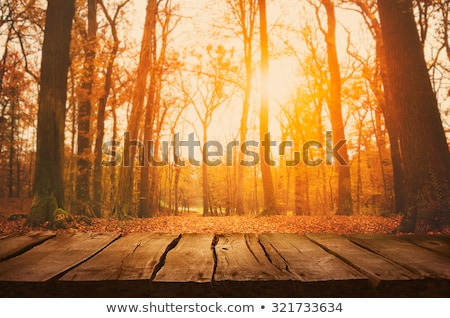 Afternoon Sun On Fall Leaves Photo stock © mythja