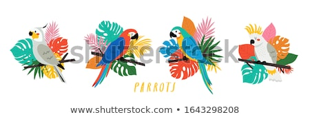 papagaio · azul · amarelo · amor · natureza · folha - foto stock © mariephoto