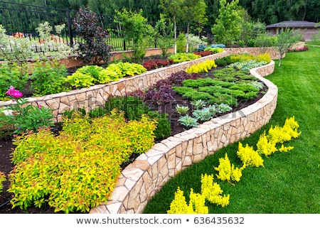 View of landscaped backyard of home Stock photo © HASLOO