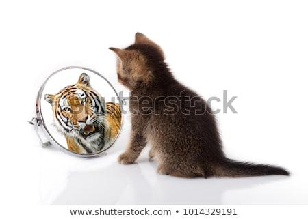 wild looking cat Stock photo © smithore