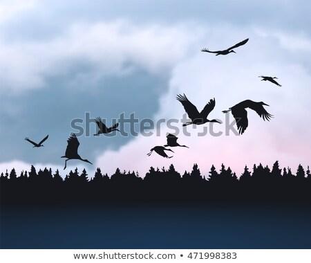 飛行 · 鳥 · オレンジ · 日没 · 雲 · 自然 - ストックフォト © tilo