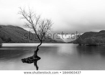 Ada ağaçlar mavi soğuk göl küçük Stok fotoğraf © ryhor