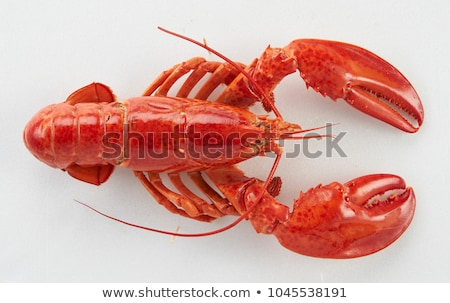 Crawfish isolated on white background Stock photo © BSANI