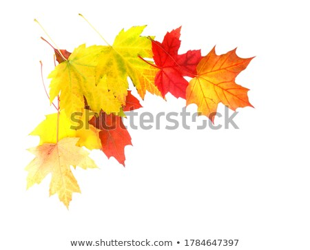 Autumn corner Stock photo © broker