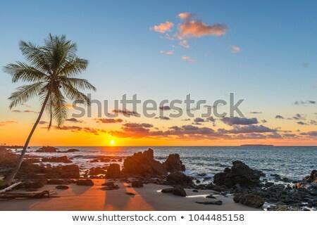 pôr · do · sol · parque · praia · flores - foto stock © anna_om