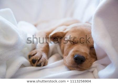 hond · kikker · ongebruikelijk · vrienden · cute · jachthond - stockfoto © willeecole