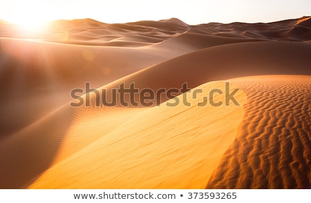 sunrise in desert Stock photo © Mikko