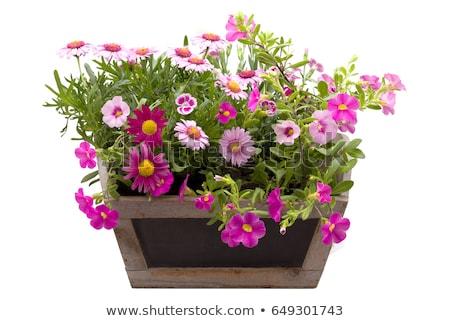 Purple flower pot stock photo st phane bidouze smithore - Pots de fleurs lumineux ...
