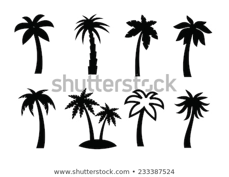 vector · icon · palmboom · illustratie - stockfoto © zzve
