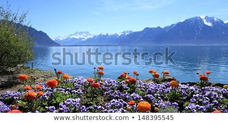 春 湖 スイス カラフル 花 ストックフォト © Elenarts