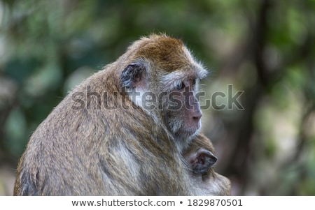 グレー 猿 セメント ショット ストックフォト © jrstock