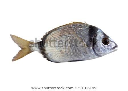 Diplodus vulgaris white sea bream fish Stock photo © lunamarina