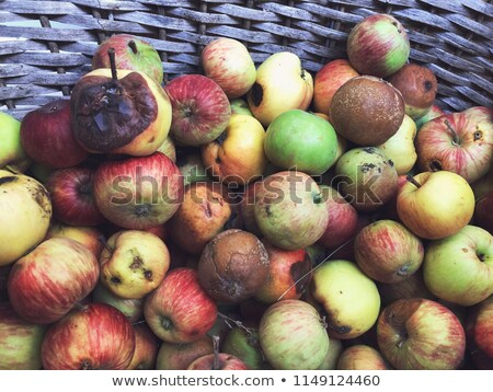 Slightly rotten apple Stock photo © digitalr